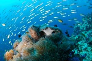 Beste Unterwasserkamera 2016